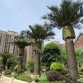 Canary fecha palmeras utilizado al aire libre, china fabricante de hecho a mano