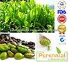 Green Coffee (Coffea Arabica) ,45% Chlorogenic Acid Extract