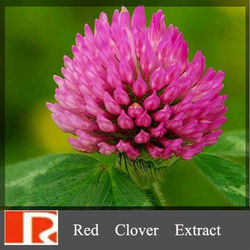 High quality Red clover extract with Isoflavones