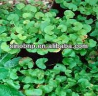 BNP Supply High Quality Best Natural Quality Gotu Kola Herb Extract Total Triterpenes Glycosides