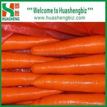 2015 Xiamen fresh Carrot (best price)