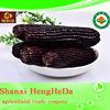 products china fresh yellow corn maize price