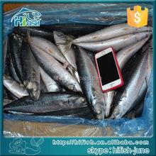 frozen mackerel for yellowfin tuna baits