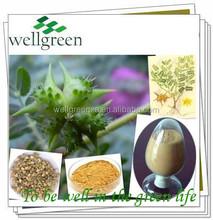 100% natural plant extract tribulus terrestris Saponins 20-98%,tribulus terrestris extract Powder,tribulus terrestris extract