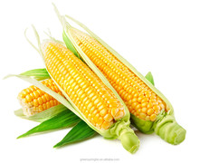 Corn Source Vegetarian Glucosamine sulfate