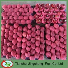 Fresh red star apple from Tianshui