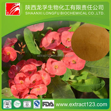 Plant extract high quality flower extract of crown of thorns