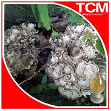 100% Natural Maitake Mushroom Extract Powder/Hen of the Woods Extract