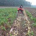camina tractor mini sola patatas cosechadora