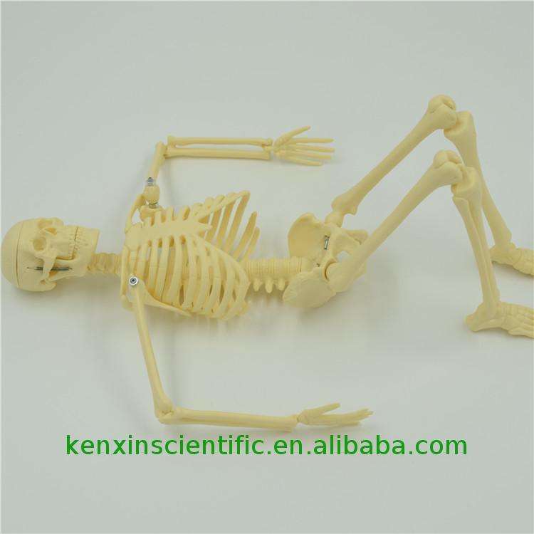 Динозавр своими руками скелет 830