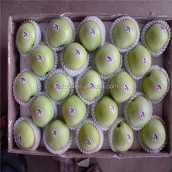 Fresh apple fruit 138-198 size golden delicious apple