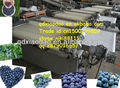 Cherry industial, blueberry, tomate cherry de clasificación de la máquina/máquina de clasificación/clasificador de la máquina