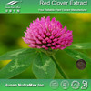 Red Clover Flower Extract, Trifolium Pratense Extract, Red Clover Extract Powder