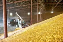 Corn in Bulk