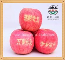 Bulk Fresh Organic YUANSHAN Apples Wholesale