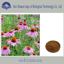 Factory Supply Echinacea purpurea extract, 4% polyphenols echinacea extract,4% chicoric acid echinacea purpurea extract