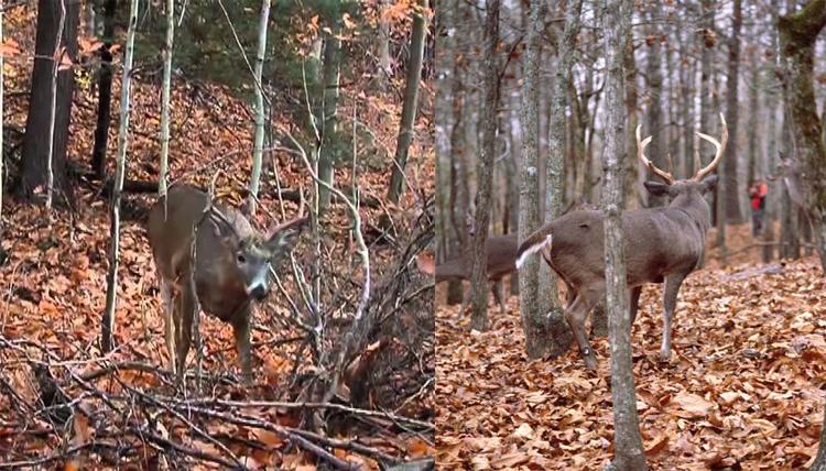 hunting4.jpg