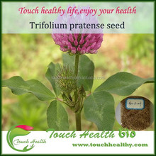 Touchhealthy supply Big stock red clover seeds as forage seeds and grass seeds