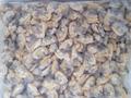 exportação de carne congelada dos moluscos frescos