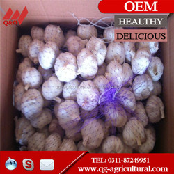 KOSHER/GAP Pure White Garlic in New Season