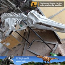 N-P-Y-66-bottlenose dolphin life like skeleton