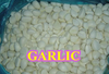 2015 Crop Chines Garlic IQF Peeled Garlic ,Garlic Clove