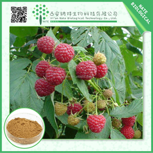 100% pure natural Low price Raspberry Extract 10:1 by TLC