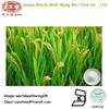 Rice bran Extract Phytoceramides Powder 10% / Rice shell P.E. Ceramide 98%
