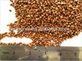 exportar buena calidad de trigo sarraceno tostado
