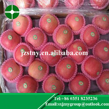 china wholesale red qinguan apple for sale