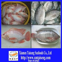 Black and Red Tilapia