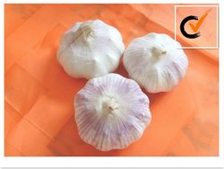 Garlic product in China