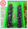 Semi precious stone purple Amethyst and quartz double points wand for crystal cure and crystal healing