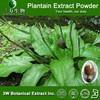 3 WBE Plantago Asatiac L., Plantago depressa Willd., Plantain Extract Powder