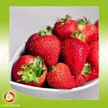 Sweet fruit juice concentrate strawberries juice 65brix aseptic in drums