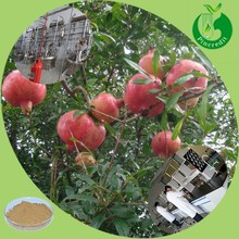 Free Sample Pomegranate Skin Extract Pomegranate Extract