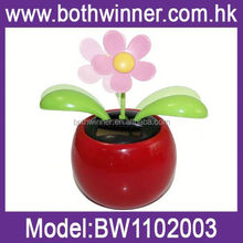 SQ164 solar apple flower