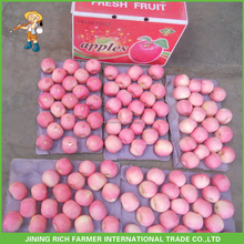 New Crop Bulk Packing Fresh Fuji Apple Fruit For Export