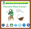GMP factory supply Export hot sale Pueraria plant extract