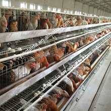 Hot sale! high quality a type cheap bird trap cage for chicken layer