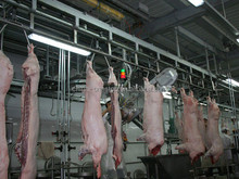 international certification pig slaughter machines