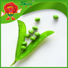 Chinese Green Fresh Pea pod