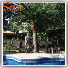fibra di vetro artificiale palme di plastica chiamato di coltura di tessuti canarino data di palma alberi per la vendita