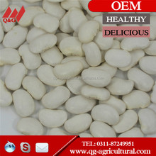 Square type White Kidney Beans