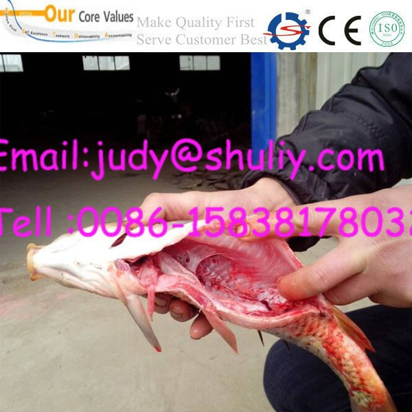 Automatic Fish Cleaning Machine Buy Automatic Fish