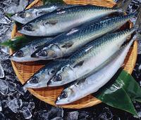 BOF pacific mackerel 10kg/carton,bulk pack, IVP,IWP,IQF