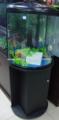 tanque de peces de acuario ecológico