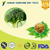 Best quality of Broccoli P.E. HPLC 0.5%-10% Sulforaphane