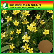 Catclaw Buttercup Root Tuber extract/Ranunculus ternatus Thunb. P.E/alkaloid