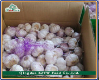 Hot sale China Normal White Garlic Price (5.0cm up, 10kgs Carton/Mesh bag)
